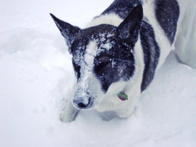 Rebecca Rawls shared this photo with us via Facebook. She said it's her dog's first winter.