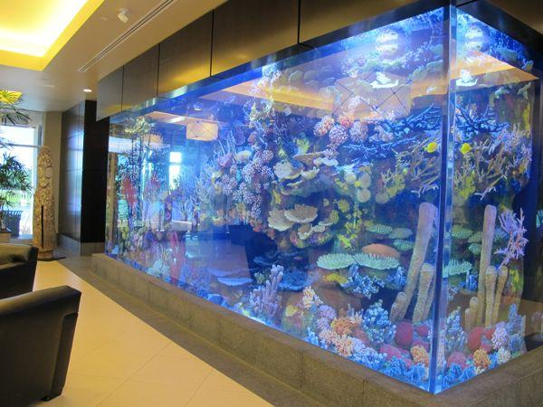 Saltwater aquarium designed by Vince Mott