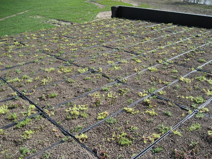 Green roof on transmitter facility.