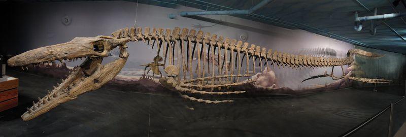 Bruce the Tylosaurus