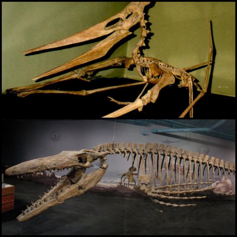 The Pteranodon And The Tylosaurus