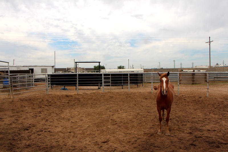 A colt stand in its pen.