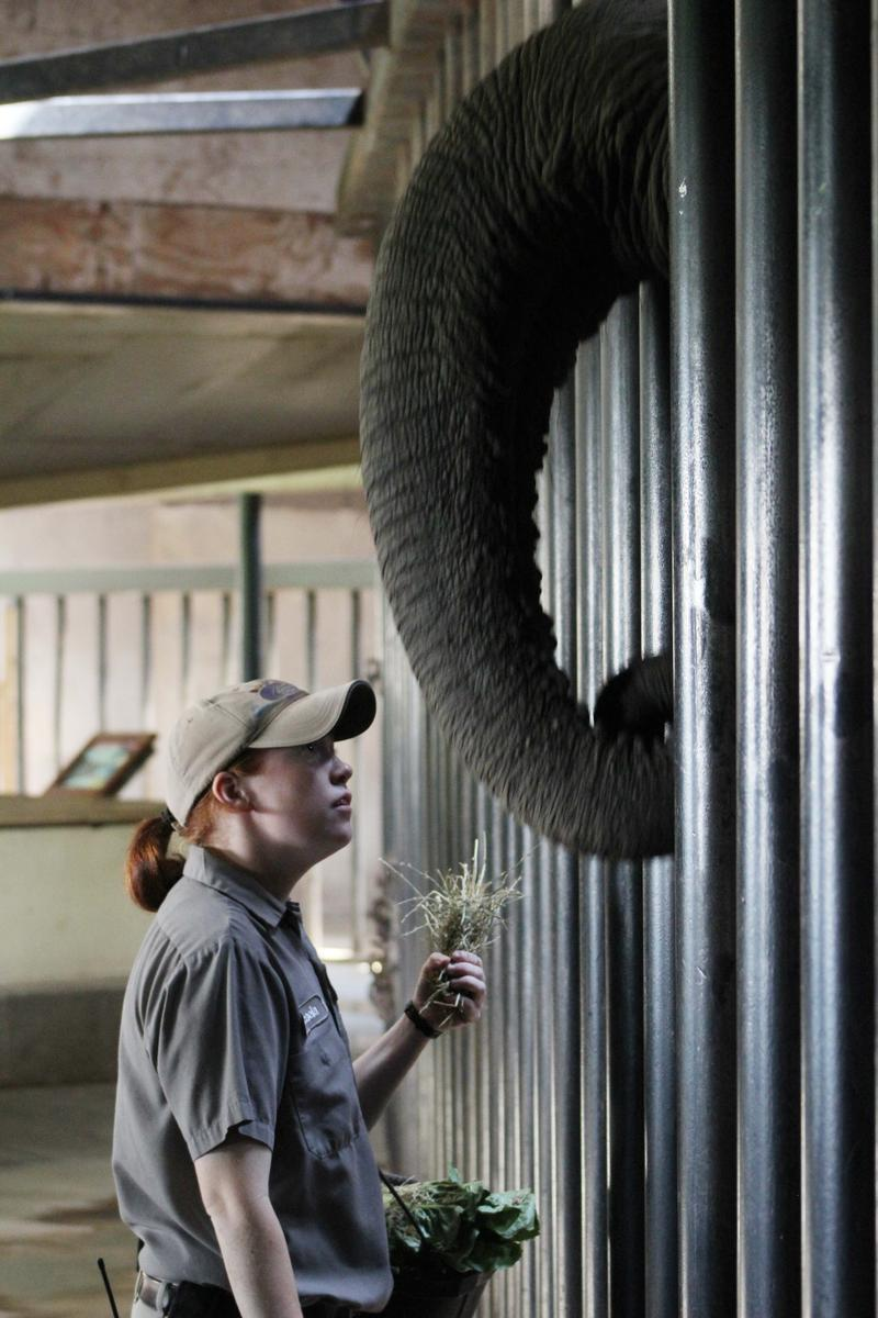 Zookeeper Micaela Atkinson looks up at Stephanie the elephant during an exercise demonstration.