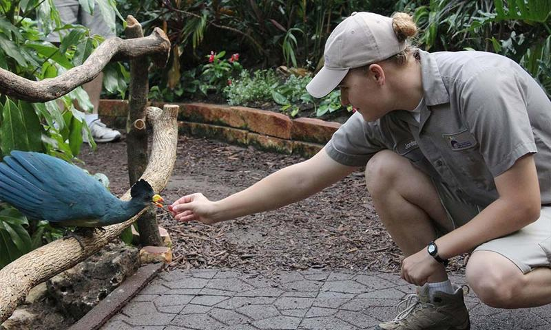 Zookeeper Jordan Wiltse offers a grape to a great blue turaco at the Sedgwick County Zoo's Tropics exhibit.