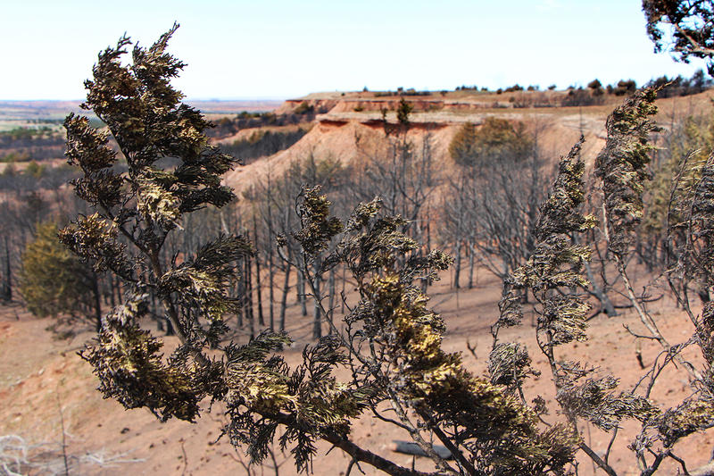 The fire, which spread across roughly 400,000 acres in Oklahoma and Kansas, charred the dry brush and trees.