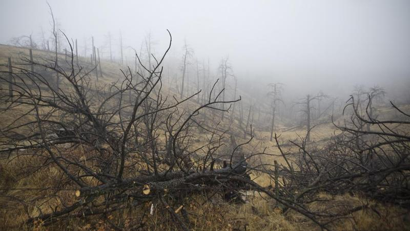 Charred trees scatter a hillside on the Pine Ridge in northwest Nebraska after a massive wildfire in 2012. That year's fire season set a modern record in the state with around 500,000 acres burned.