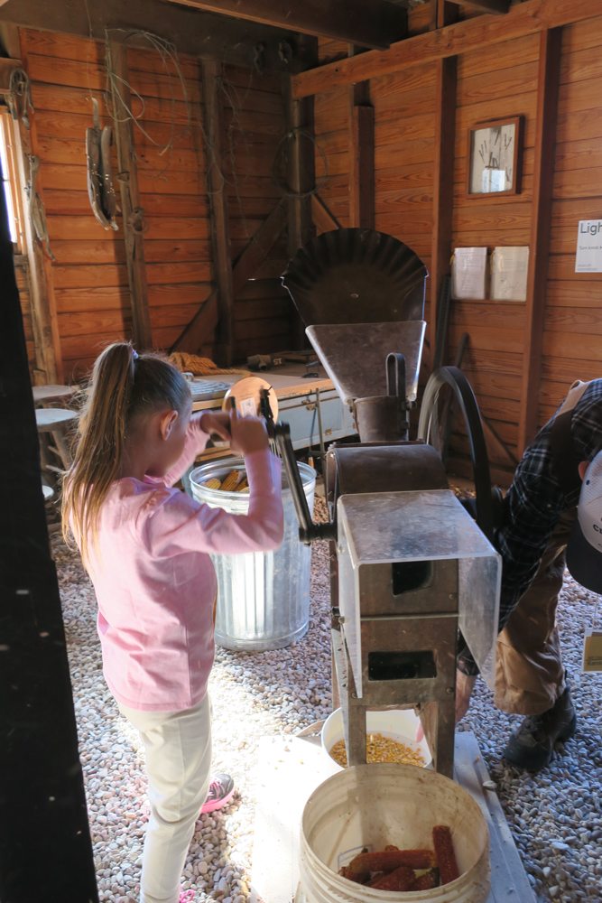 A child cranks a machine that removes kernels of corn from the cob.