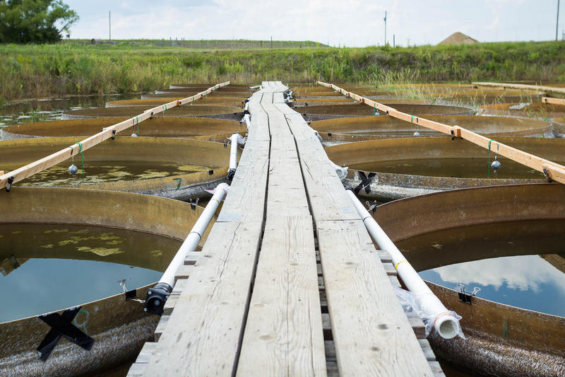 One of two narrow docks that allows researchers to access the experiment tanks at the KU Field Station north of Lawrence.