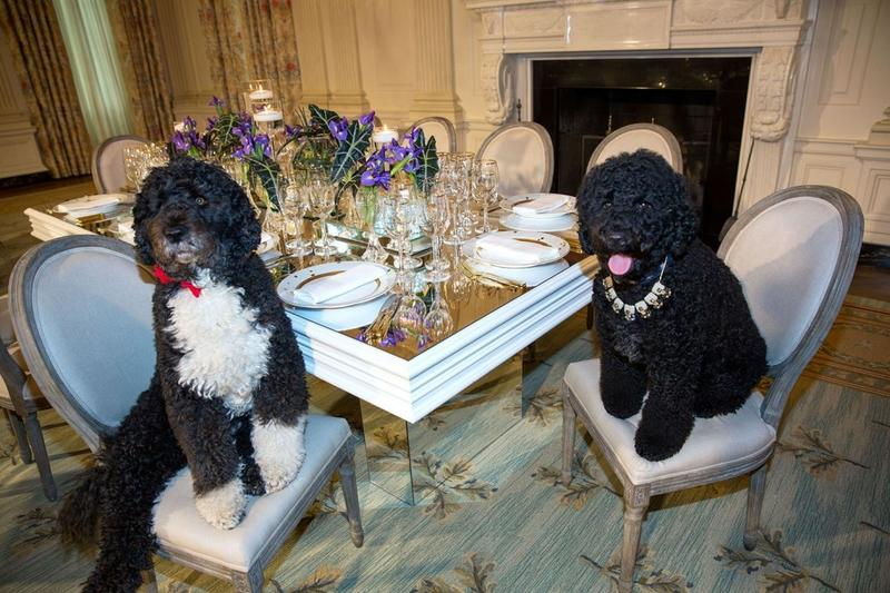 Bo and Sunny (Obama)