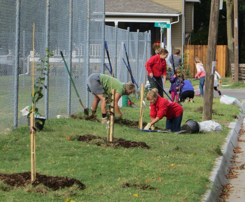 Volunteers plan trees near College Hill Elementary School.