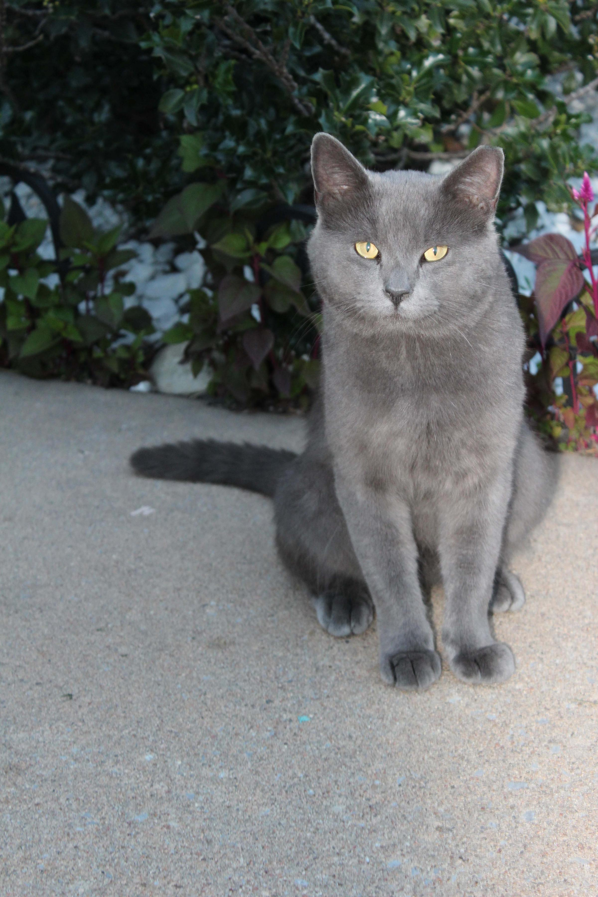 Group Advocates For Trap, Neuter, Return To Control Feral Cat ...