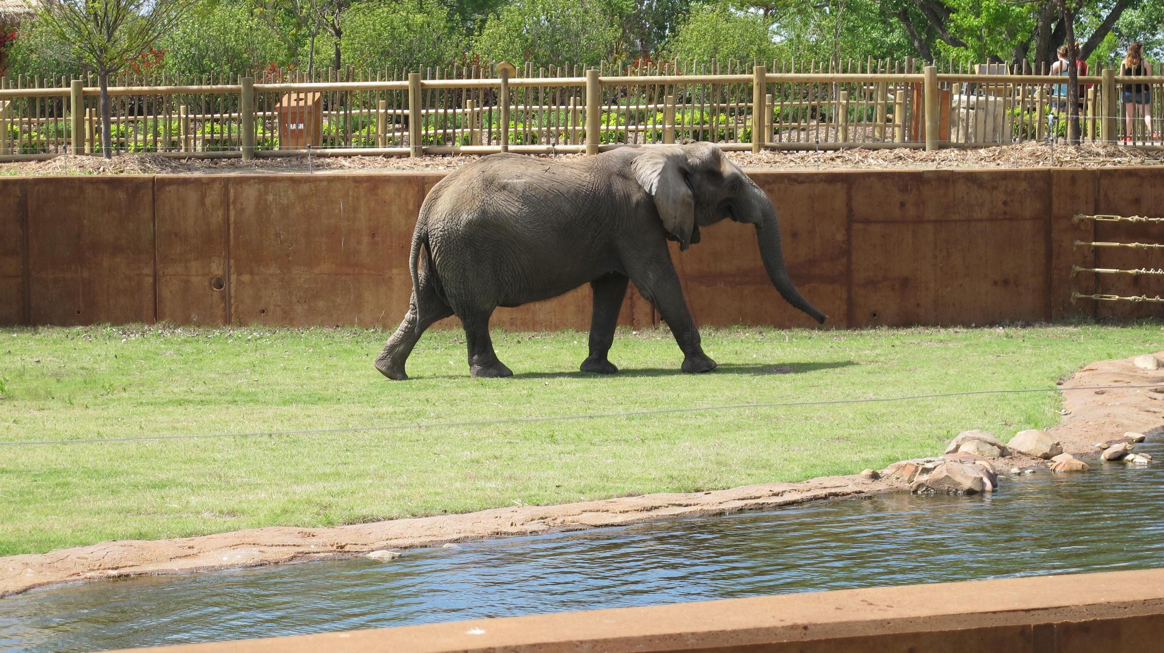 new elephant exhibit opens at sedgwick co zoo kmuw. Black Bedroom Furniture Sets. Home Design Ideas