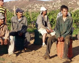 Mexican immigrants on a grape farm in California.