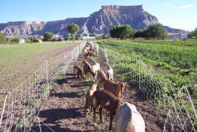 Mesa Farm