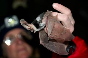"""Intercepted"" bat in Sedona"