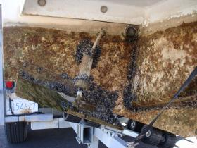 Quagga mussels attached to the bottom of a boat.