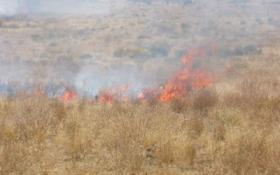 Burning cheatgrass, a plant species heavily disliked by land managers.