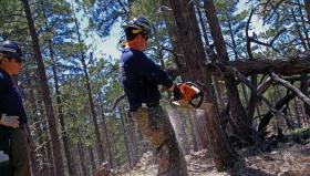 Crews thin areas of the Coconino National Forest.