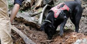 Rescue dogs search for salamanders in the Jémez Mountains of New Mexico.