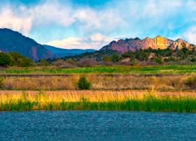 Made up of reclaimed wastewater, the Sedona Wetlands provides a habitat for wild birds.