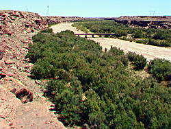 Tamarisk trees grow in thick stands along the Little Colorado River near Cameron, Arizona.