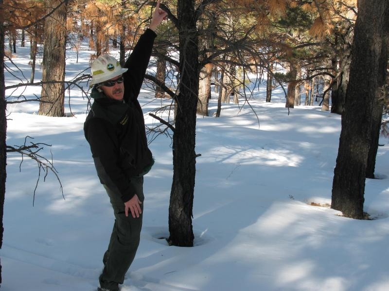 Coconino National Forest Soil and Water Specialist Dick Fleishman points to a tree that was moderately burned by June's Schultz Fire.