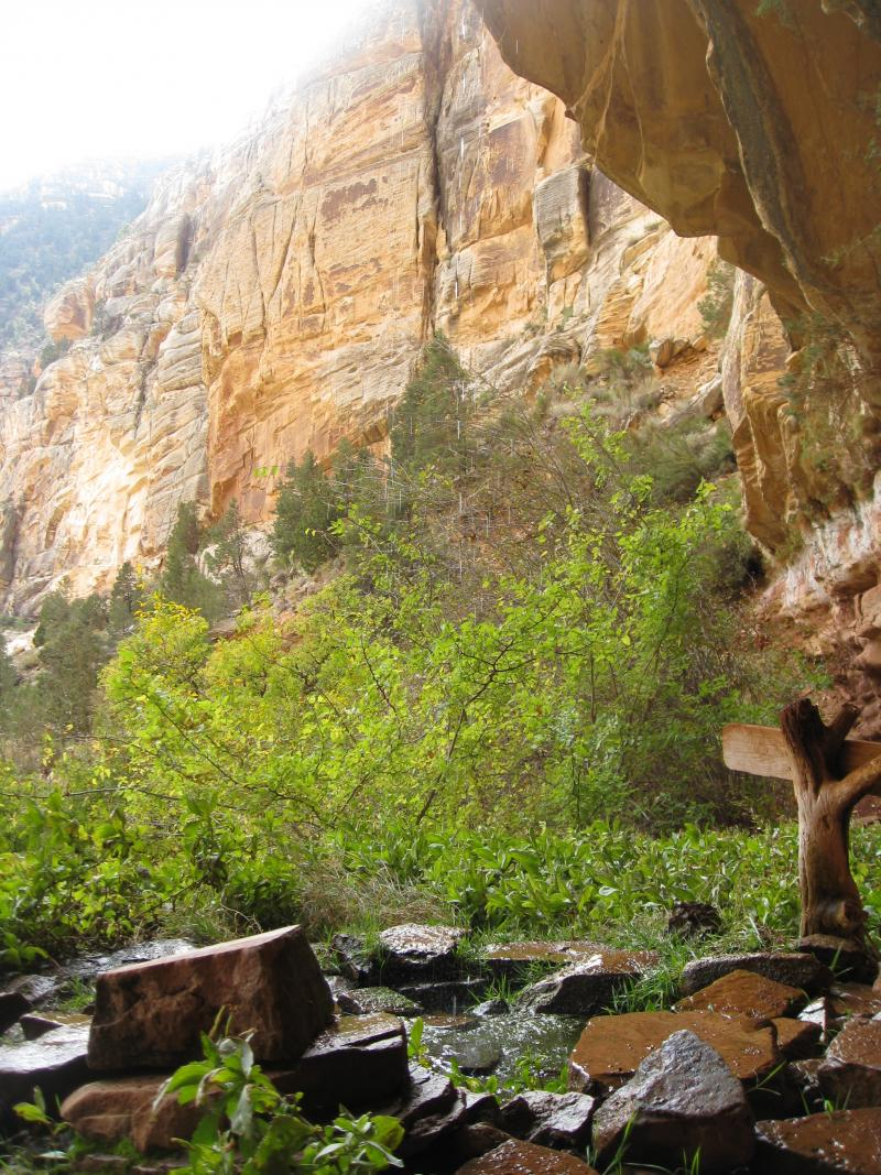 The water from Dripping Springs in the Grand Canyon National Park supports creature for miles around.
