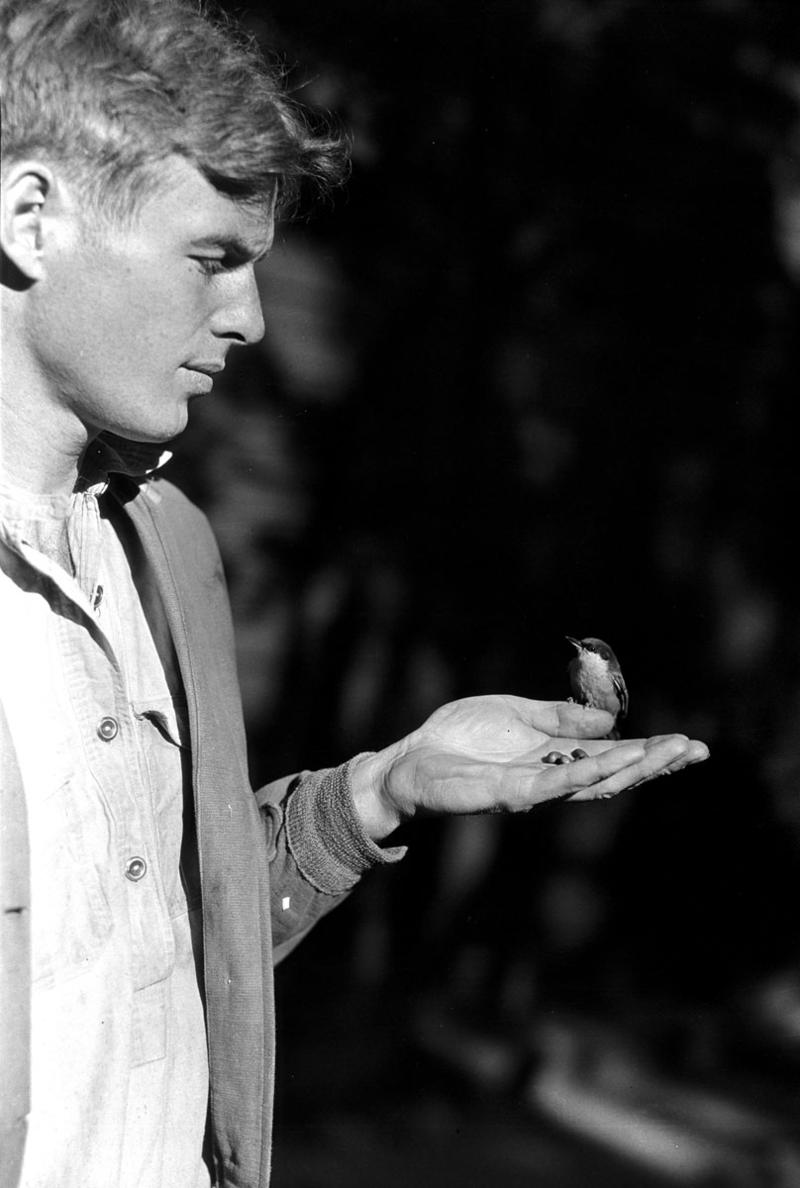Ranger Naturalist Edwin McKee with pygmy nuthatch, circa 1929.