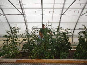 Judy Weiss and husband Pete peer out from their tomato jungle.