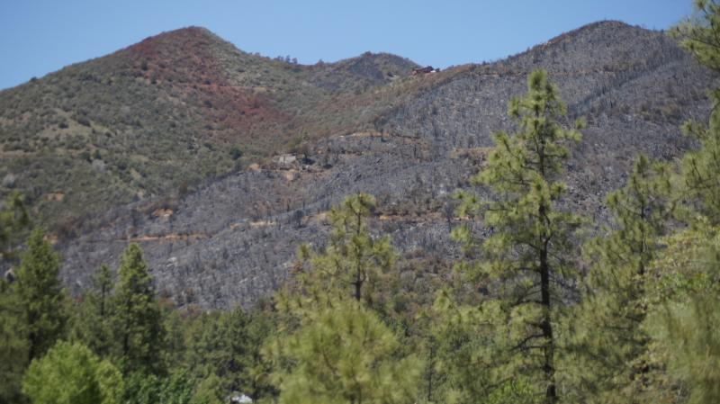 Red stripes in this part of Forest land show where plans dropped flame retardant to stop fires.