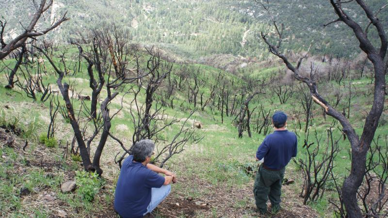 Dave Moore & Daniel Salcido survey a hill overlooking the Crown King area that the BAER team treated.  The 60°slope is so steep that preventing erosion was a high priority.