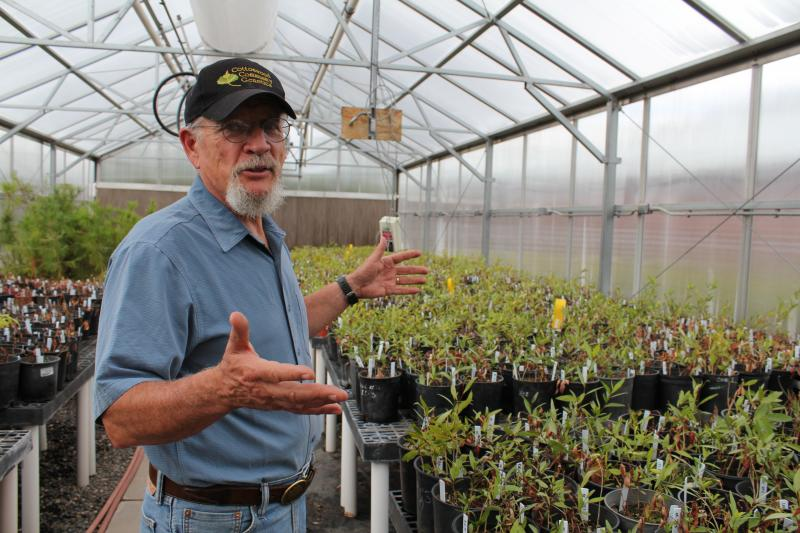 NAU biology professor Tom Whitham describes cottonwood cuttings in the greenhouse at Northern Arizona University.