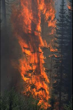 Green Knoll Wildfire in Jackson, Wyoming,
