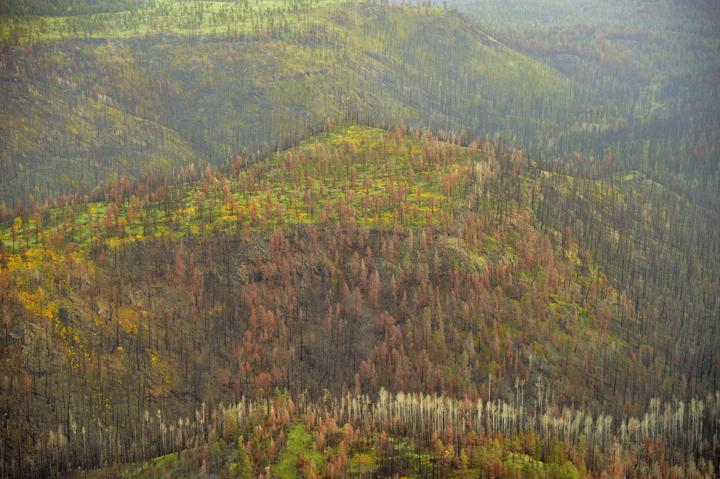 After the 2011 Wallow Fire