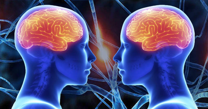 Image result for brain and empathy