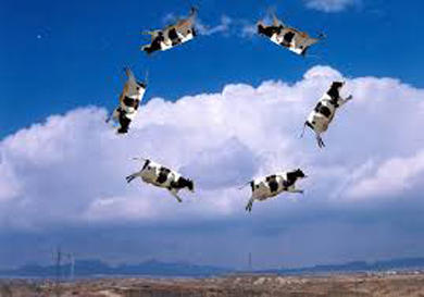 Scott Thybonys Canyon Commentary Land Of Flying Cows Knau