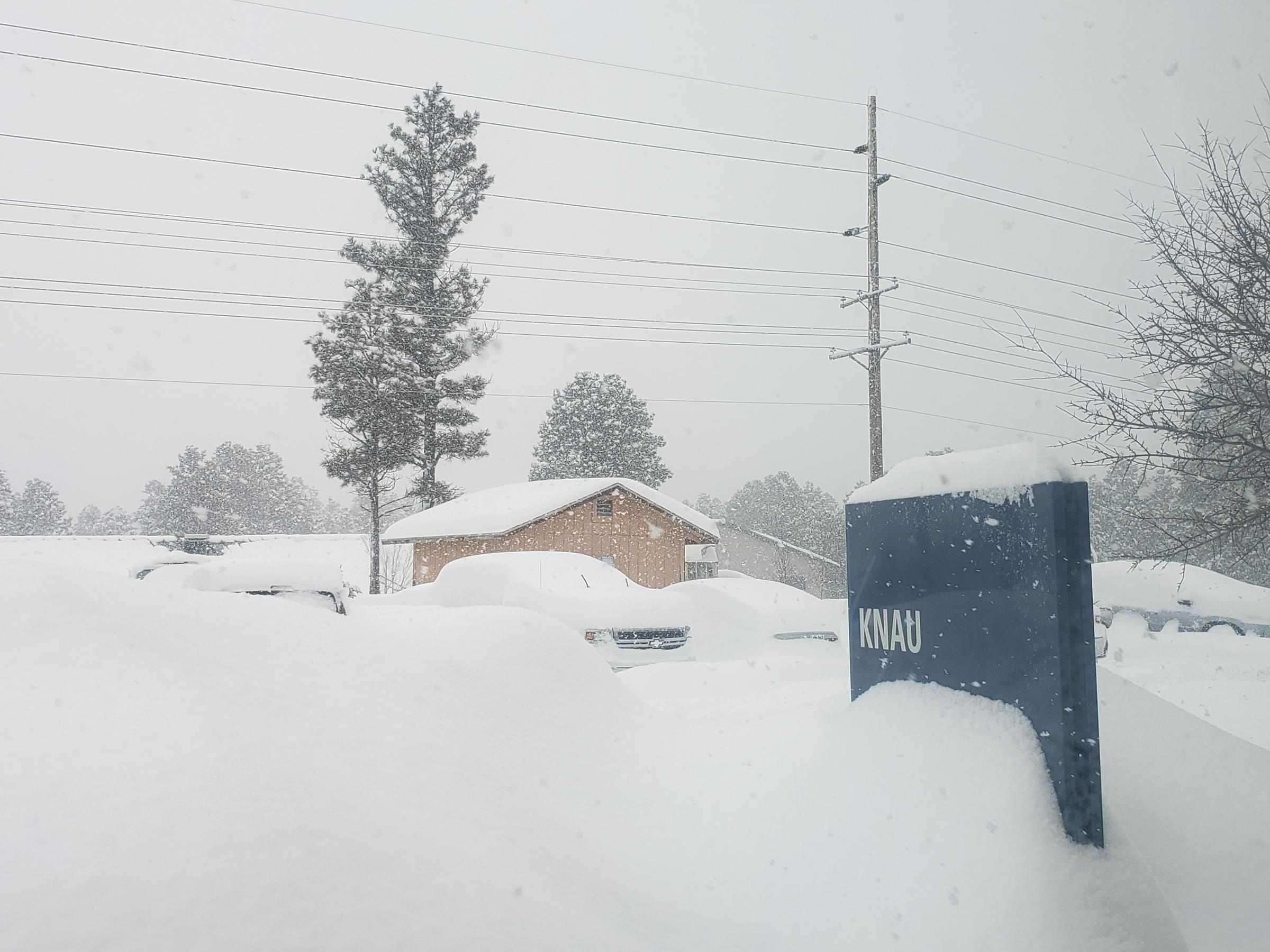 Where'd he go? Doggy delight as massive snow dump hits Arizona, US