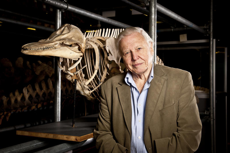 David Attenborough in the Natural History Museum.
