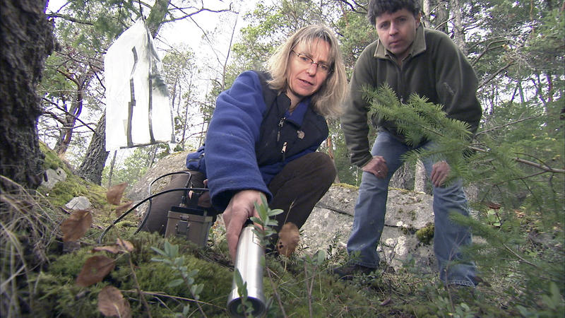 Dr. Suzanne Simard, University of British Columbia and graduate student, Marcus Bingham, use Geiger counter to determine if radioactive materials representing nutrients were shared though the root system from the Douglas fir 'mother' tree to other nearby.