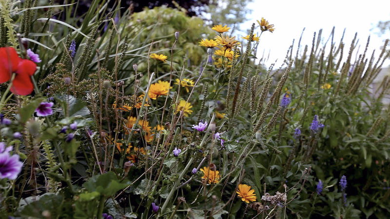 A multitude of plants from various species co-exist in harmony in a cultivated garden in Winnipeg, Manitoba.