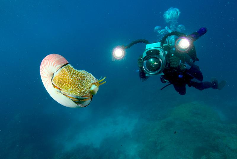 Modern Man meets Ancient Mollusc: Presenter Richard Smith and the Nautilus.