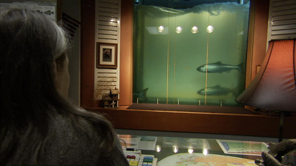 Bonneville Dam counting window, where returning salmon are counted each year.
