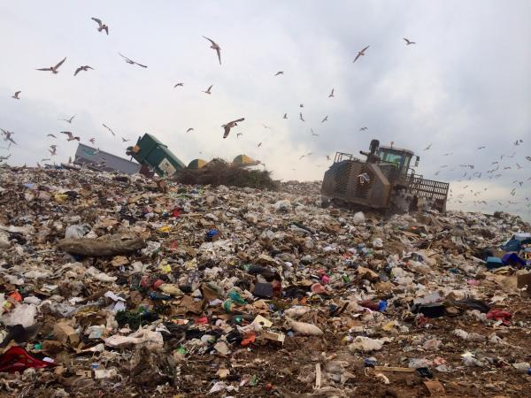 Birds flock over the active portion of Jeff Bedick's Waste Connections landfill.