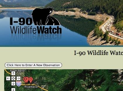 The I-90 Wildlife Watch website offers a way to report any wildlife you see while crossing the Cascades over Snoqualmie Pass. It's a multi-agency, multi-state effort that asks you keep your eyes open for animals along the road.