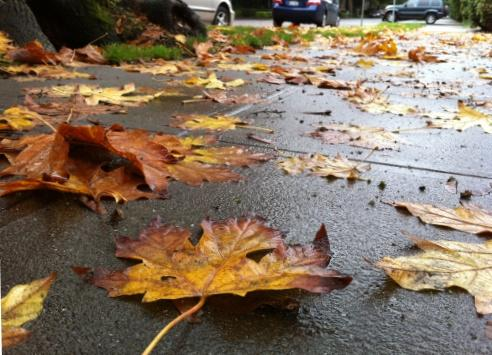 A surprisingly strong windstorm blew through the state, leaving hundreds of thousands without power, and closing or delaying school openings on Tuesday. This street in Seattle's First Hill neighborhood is covered with autumn's colors.