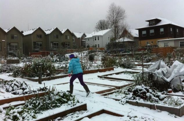 Kids will have a 'snow day' in many districts on Tuesday, including Seattle, Everett and Lake Washington schools. This was the scene at a Queen Anne neighborhood P Patch in Seattle on Monday.