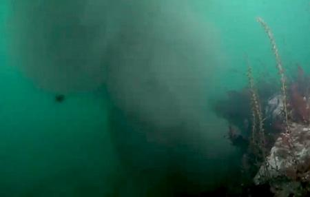 A plume of pollution and sediment billows from an underwater storm drain in Seattle's Elliott Bay earlier this week.