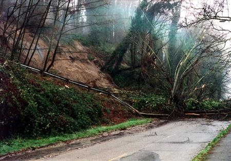 A past landslide in West Seattle, near Hamilton/Viewpoint Park.