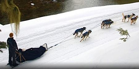 An image from the website for Outdoor Adventures Whistler, which offers sled dog outings.