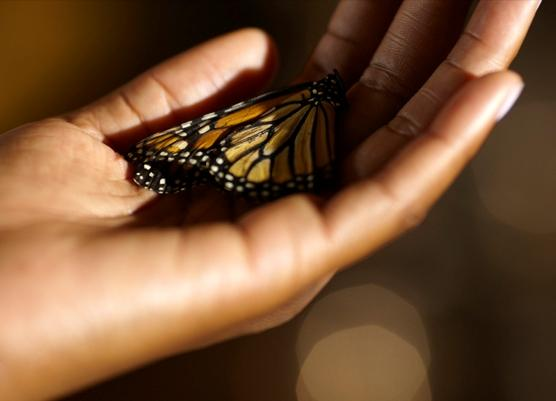 "The film ""Butterfly Rising,"" written and directed by Tanya Wright, will close the 2011 Langston Hughes African American Film Festival."